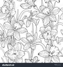 daffodils narcissus dense outline sketch drawing stock vector