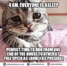 Sad Cat Meme - sad cat memes pictures funny cute angry grumpy cats memes