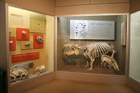 framing fossil exhibits phylogeny extinct monsters