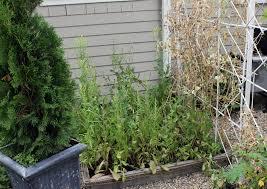 winterizing garden beds