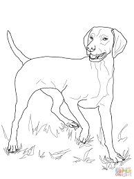 vizsla coloring page free printable coloring pages