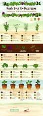 170 best kitchen herb garden ideas images on pinterest garden