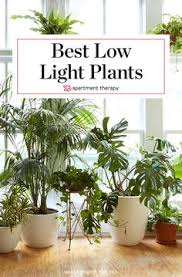 good low light plants roundup 8 houseplants even college students can keep alive