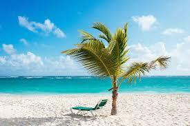 Where To Put A Pool In Your Backyard Transplanting A Palm Tree George U0027s Crane Service Inc