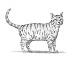 how to draw cats drawing easy cat step by step pencil