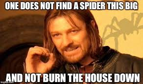 I Saw A Spider Meme - couple shares why they can t leave their home and everyone is