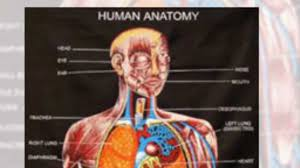 Study Anatomy And Physiology Online 7 Tips How To Learn Anatomy U0026 Physiology Easily Youtube