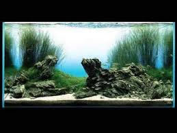 Aquarium Aquascapes Film Takashi Amano Aquarium Aquascaping Youtube