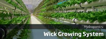 hydroponic gardening systems 17 best images about hydroponics