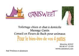 toilettage de l affenpinscher canisweet toilettage chiens chats à cernay la ville 78720 wamiz