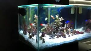 fluval edge marine light fluval edge saltwater youtube