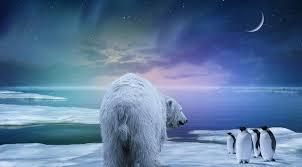 download wallpaper polar bear penguin northern lights hd background