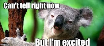 Koala Meme Generator - koala memes imgflip