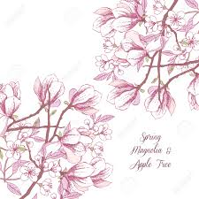 drawn elower spring flower pencil and in color drawn elower