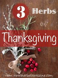 herbal rootlets no 29 3 herbs of thanksgiving