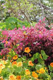 7 best native plants dmv images on pinterest native plants