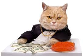 business cat stock photography your meme