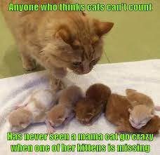Cute Cats Memes - catsmemes funny animal pictures cat memes just like cat funniest