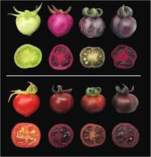 Different Shades Of Red Pigments Made By Beets May Help Boost Resistance To Disease And