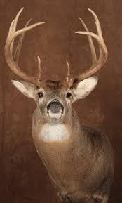 deer heads deer heads 2 deer head wall art mounting a deer head