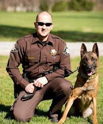 belgian malinois in movies rocky mount man pleads guilty to attacking police dog franklin
