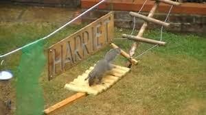 Backyard Agility Course Squirrel Backyard Obstacle Course Backyard