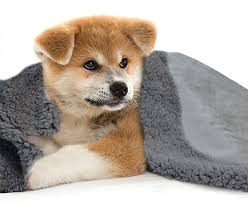 Dog Blankets For Sofa by Best Dog Blankets Reviews And Tips For Making The Right Choice