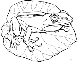 frog illustrations cliparts
