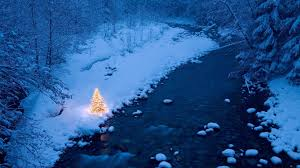 winter christmas tree wallpaper high definition high quality