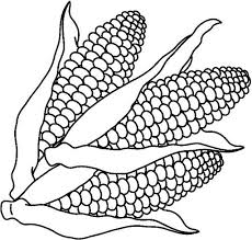indian corn coloring pages virtren com