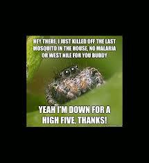 Spider Meme Misunderstood Spider Meme - misunderstood spider a hilarious meme gallery craveonline