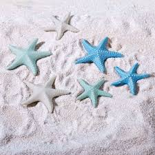 starfish decorations pastel ceramic starfish decorations set of 6 pretty starfish
