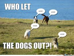 who let the dogs out by stacey davis 94043 meme center