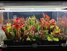 Fluorescent Light For Plants Fluorescent Indoor Plant Lighting Icps