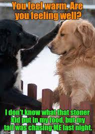 Sick Puppy Meme - sick puppy imgflip