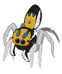 peacock jumping spiders jared u0027s blog
