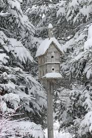 424 best snow birds images on pinterest beautiful birds animals