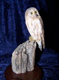 Owl Item by Live Auction Items 2013 Rocky Mountain Raptor Program