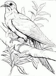 bird coloring image reusableart