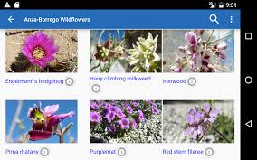 anza borrego wildflowers anza borrego wildflowers android apps on google play