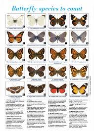 big backyard butterfly count monarch butterfly zealand trust