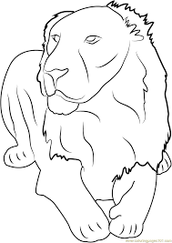 asiatic lion gir forest india coloring page free lion coloring