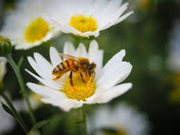 free images nature blossom flower petal pollen botany