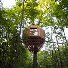 file tree house jpg minimalist modern treehouse built around 100 year old oak curbed