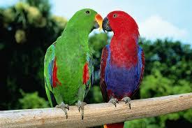 colorful parrot species
