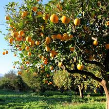 Planting Fruit Trees In Backyard 22 Best Unique Gardening Techniques Images On Pinterest