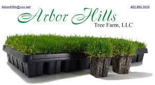 planting grass plugs arbor tree farmarbor hill trees omaha