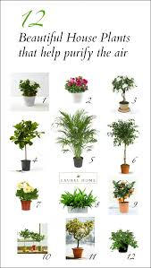 10 easy care plants for plant beautiful flowering house plants those are so beautiful i
