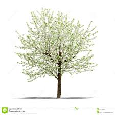 green tree on a white background stock image image 31183869