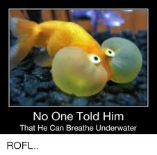 Rofl Meme - no one told him that he can breathe underwater rofl meme on me me
